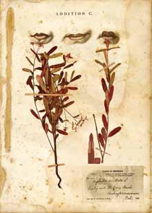 marguerite perret, new world herbarium