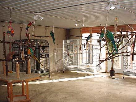 iowa parrot rescue, parrots, parrot building