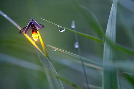 radim schreiber, fireflies