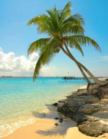 palm tree, coconut tree