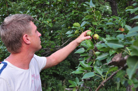 clint stephenson, king edwards orchard