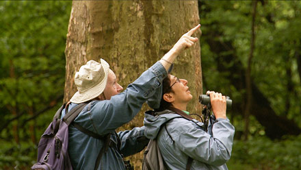 birders: the central park effect, birders movie, birders