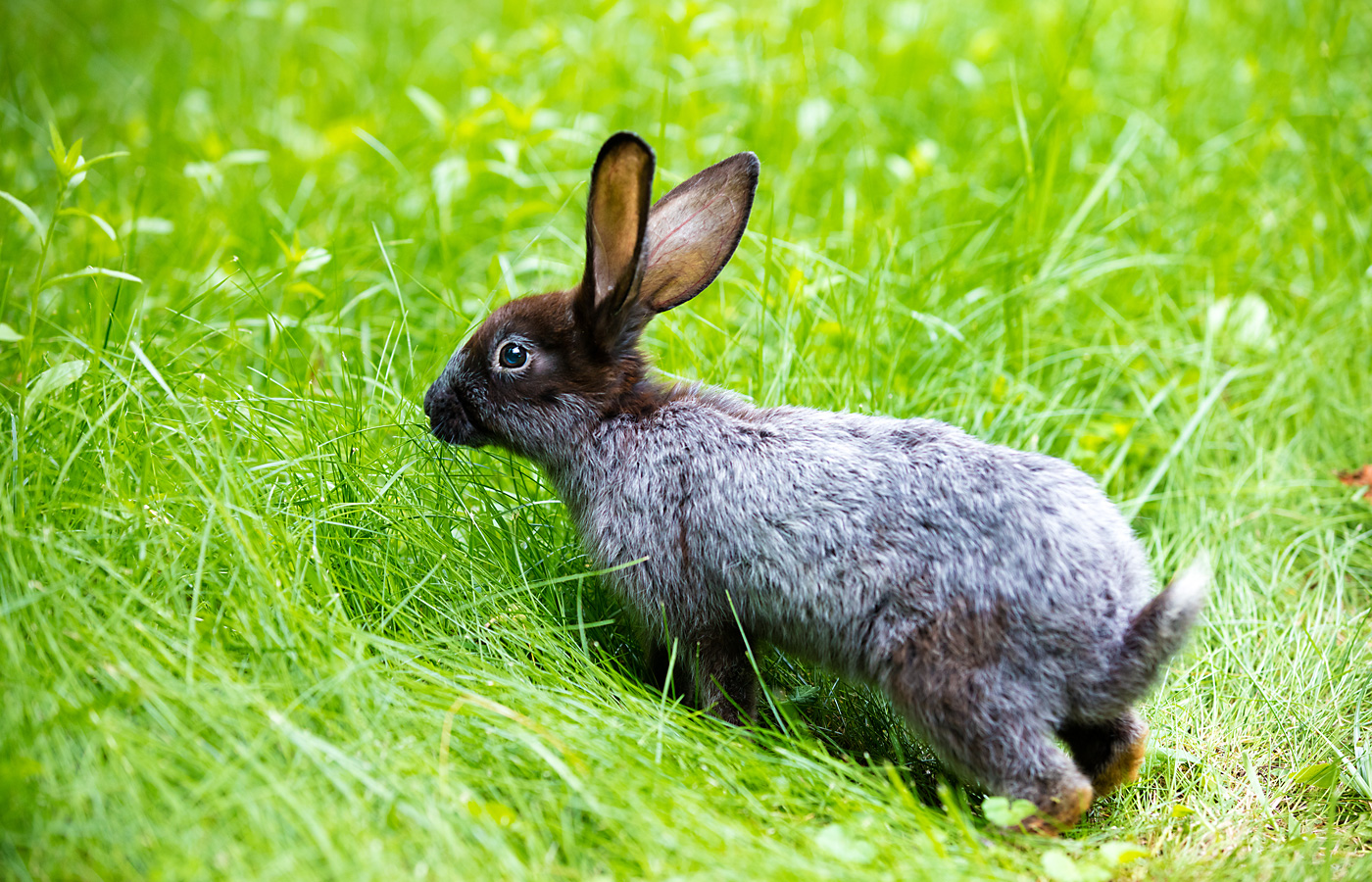 rabbit proof plants – Iowa Source